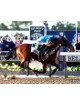 American Pharoah signed 8x10 Photo 2015 Belmont Stakes Finish Line Horse Racing Triple Crown- Steiner Holo