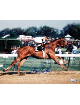 Affirmed signed Kentucky Derby Horse Racing 8x10 Photo