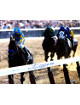 American Pharoah signed 16x20 Photo 2015 Belmont Stakes Final Stretch Horse Racing Triple Crown w/ Victor Espinoza- Steiner Holo
